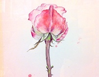 roses, watercolor