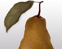 Illustration pear/putrefaction