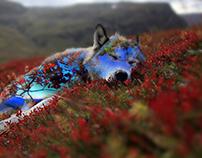 Wolf & Nature