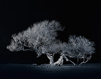 Night trees II