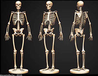 Project Bone