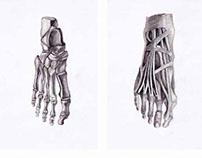 Human Anatomy, Life Drawing