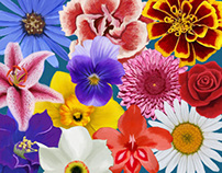 2014 Birth Month Flower Calendar