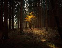 The Harz