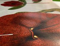 Passiflora Mariquitensis