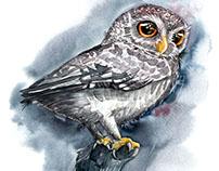 Grey Watercolor Owl