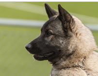 Hund utställning Ockelbo - Dog Competition Ockelbo-6