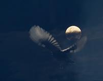 five blue moons