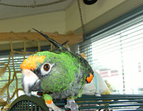 Important Facts to Know About Parrots
