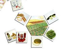 Ficha de especificaciones técnicas de alimentos/bebidas