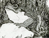 Frog (Book Illustration)