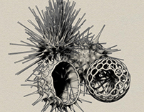Radiolaria