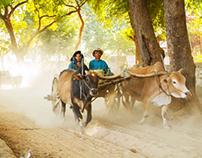 Oxcart in Myanmar