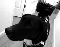 """Preta"" A day in the life of our dog w/ Nikon Coolpix"