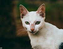 Stray Tomcat