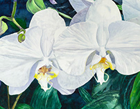 Two White Orchids painting