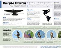 Purple Martin Infographic