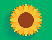 Flat Sunflower