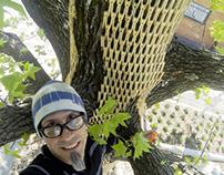 Tree Wrap VI: The video!