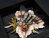 Entomology Shadowboxes