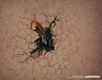 Greenpeace | PRINT