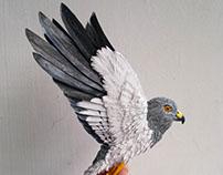 Project Hen Harrier