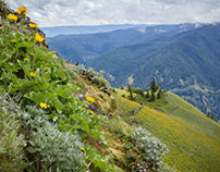 Dog Mountain, Washington State