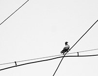 Pigeons and Lines
