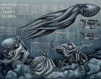 Locomotion of the Octopus Vulgaris