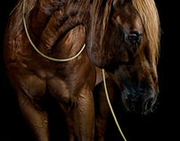 Portraits of horses