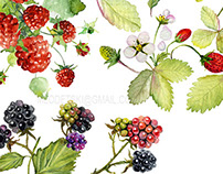 Collection of watercolor berries.