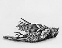 The Sparrow.