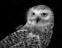 WB 2 - Owl