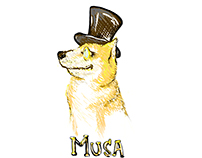 Musa - shop dog extraordinaire