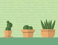 Succulent Series