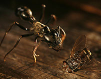 Personal - Ant & fly