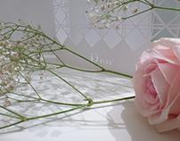 La délicatesse - Dior