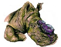 gergedan / dehorning rhino - de/da dergi . sayı 6