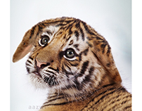 Baby Tiger - digital imaging