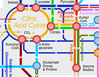 Metro Map of Metabolism - The Overview