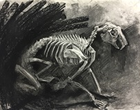 skeleton charcoal studies