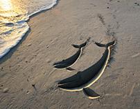 Whalehaven Conservation Coast - Whale Coast Campaign