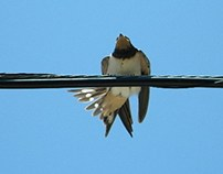 Birds' behaviour