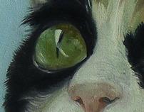 Korsan kedi