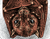 The little bat