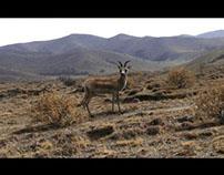 Gazelle test