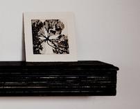 Hydrangea - Aquatint Series