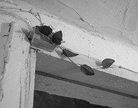 growth in defiance