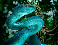 The Artwork Of Abner - Snake Nature