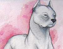 Watercolor 6 - Dogo Argentino